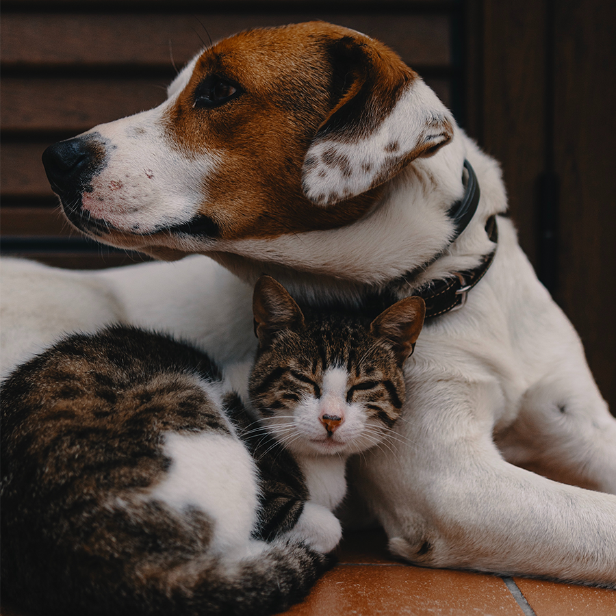 Prekės naminiams gyvūnams